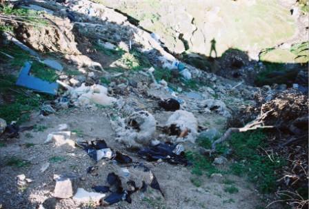 Μπάζωμα ρέμματος στη Βορειοανατολική Μύκονο με νεκρά ζώα κ.ά.